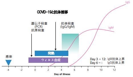 抗体の経時的変動